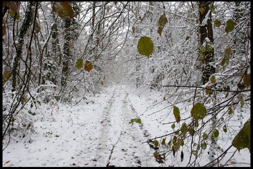Le Loiret en hiver